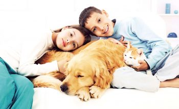Pet Emergency and First Aid Basics