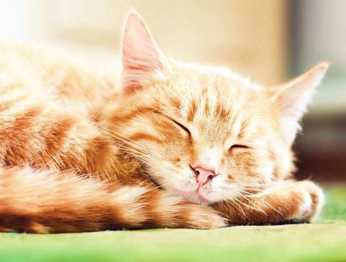 Pet Nutrition and Feeding