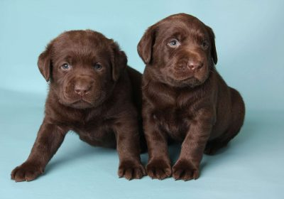 Puppy Tooth Loss: What Age?