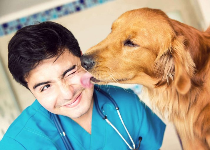 Vaccination Schedule for Dogs