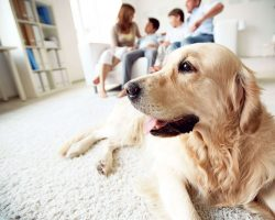 Eye Care for Dogs FAQs