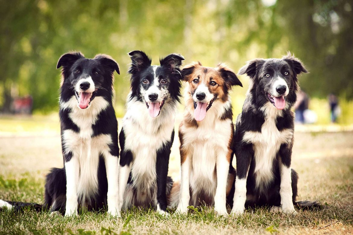 Older Dogs: Dealing With Dog Dementia