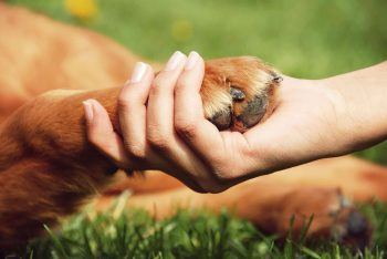 Keeping Your Dog Safe From Summer Heat